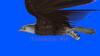 CG  Eagle120419-007